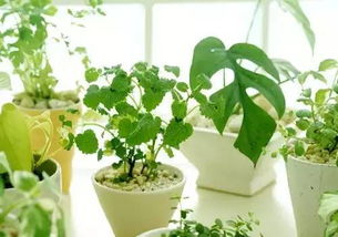 The Cause of Indoor Air Pollution